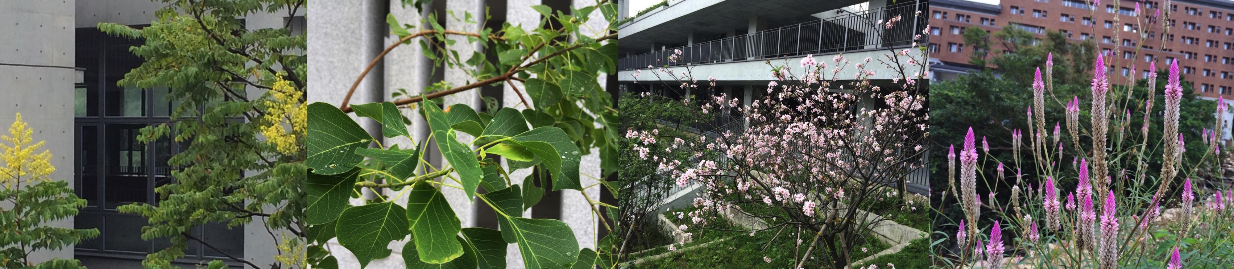 新校區植物